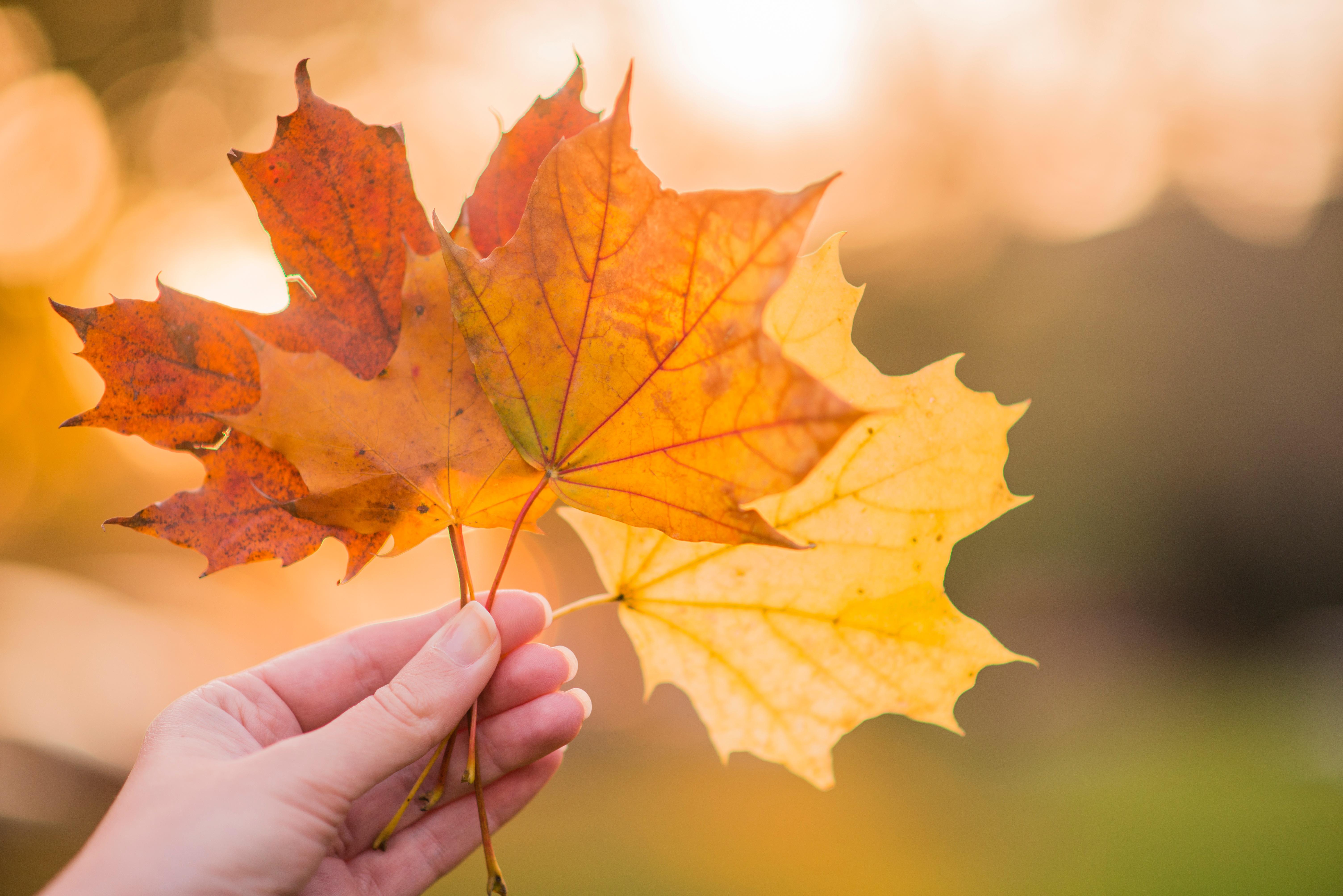 Minnesota Landscape - Fall Colors.jpg